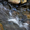 "05-06-2011 ""Rushing Stream""  A shot from the stream in my yard.  Hope to get comments on your photos done today. Donna"